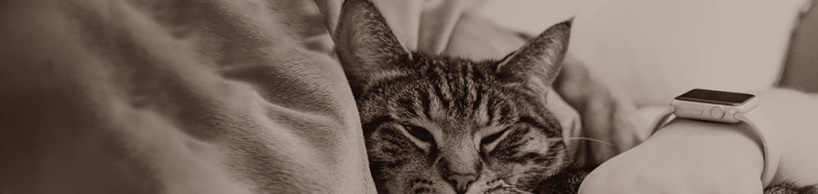 Header Iotinspector Cat